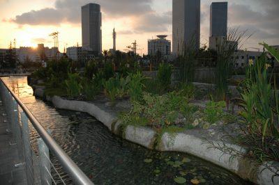Ayala Water & Ecology-2
